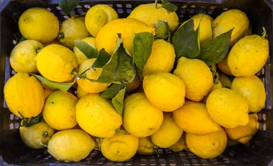 Market Lemons