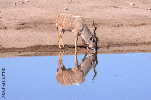 Reflection at the watering hole 1. Etosha