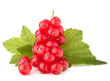 Red currants and green leaves still life