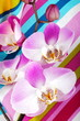 canvas print picture - Orchidea