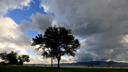 Rain clouds and tree timelapse