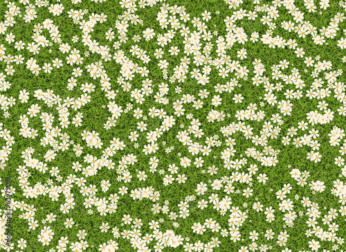 many white open flowers in a green grass backgrounds