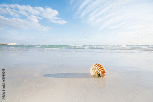 nautilus shell on white Florida beach sand under the sun light