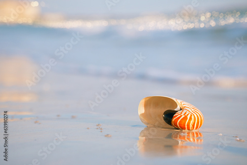 nautilus shell on a sea ocean beach sand with golden waves and r