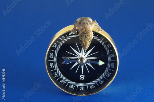 Gecko Lizard and Compass