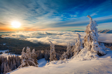 Winter sunrise over the clouds with fir full of snow