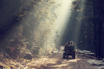 Traditional romanian cart in forest with rays of light