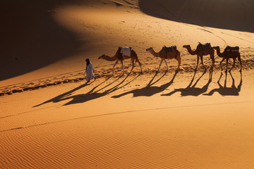 Desert Sahara, Camel Ride Caravan, Enjoying and happy People