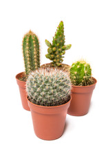 Collection of cactus isolated on white background