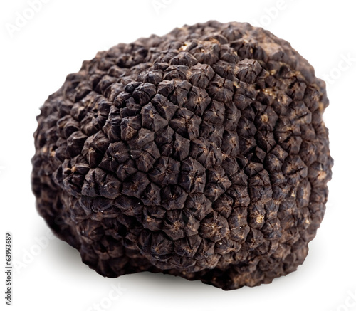 Black truffle on a white background.
