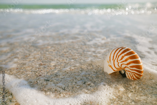nautilus shell in ocean with waves under the sun light