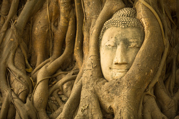 Close-up Head of Buddha in Ayutthaya, Thailand.