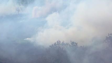 Пожар в тропиках