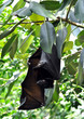 bats on tree