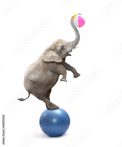 Funny elephant playing with ball.