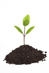 tohumdan çıkan can