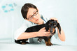 Veterinarian and dachshund