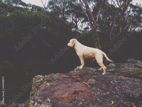 Dog looking over a cliff in Australian Bush