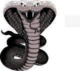 Cobra tattoo - 64011670