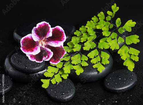 Spa concept with beautiful deep purple flower, green branch and