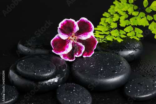Spa concept with beautiful deep purple flower of geranium, green