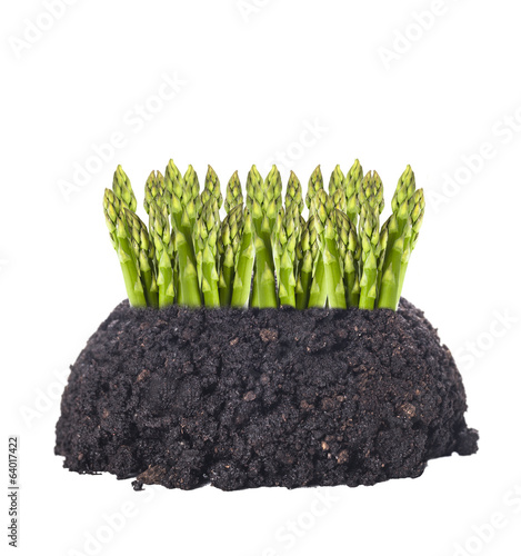 asparagus growing out of ground , isolated