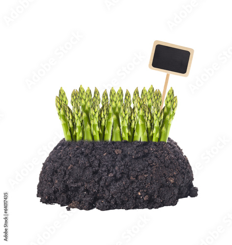 green asparagus growing out of ground with garden sign,isolated