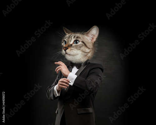Business man cat head