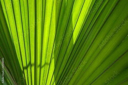 Papiers peints Palmier Green palm leaf
