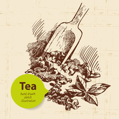 Tea vintage background. Hand drawn sketch illustration.