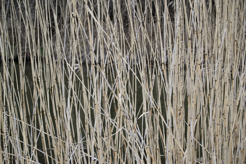 Reeds in a lake (sweden, landscape, background, wallpaper)