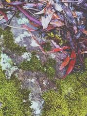 moss, lichen and fallen leaves on a rock