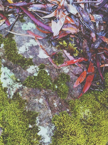 moss, lichen and fallen leaves on a rock