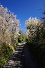 chemin arboré et fleuri près d'Angles sur l'Anglin