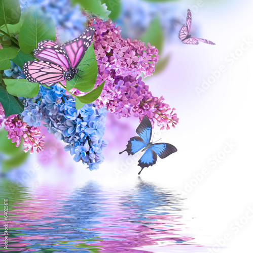 Keuken foto achterwand Lilac Branch of lilac blue and pink butterfly and water