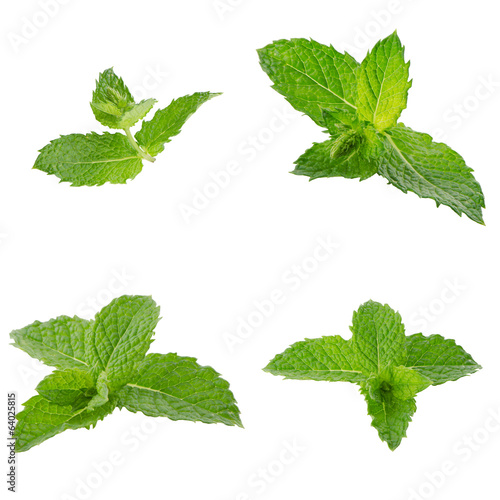 Fresh mint close up