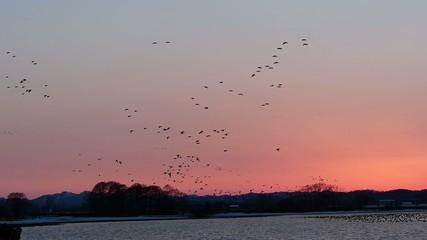夕やけと渡り鳥の群れ17
