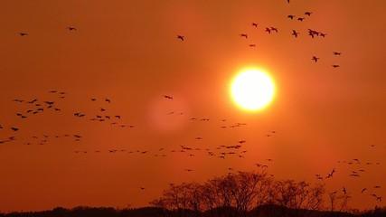 夕やけと渡り鳥の群れ8