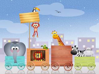 animals circus