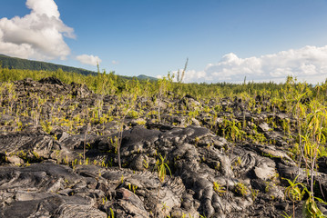 Black lava field and vegetation