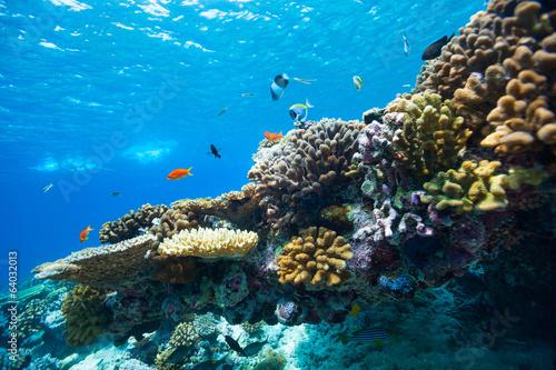 Papiers peints Recifs coralliens Coral reef underwater