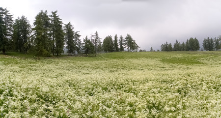 Walking to Hafling - Avelengo into the Nature