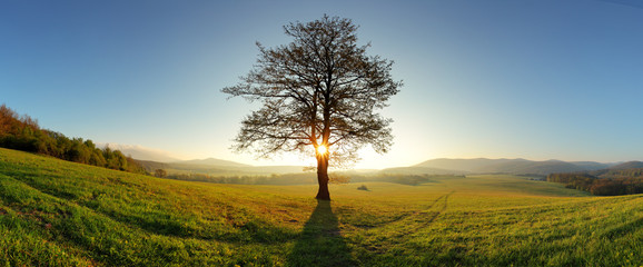 Sun and tree - Meadow panorama