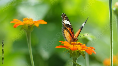 Butterfly eating pollen flower