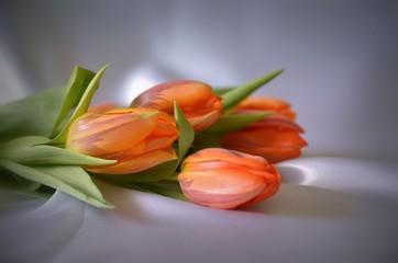Dekoration Tulpen