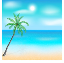 Sole palm on the beach