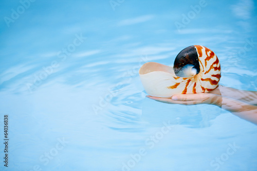 nautilus seashell in child hands with crystal blue water backgro