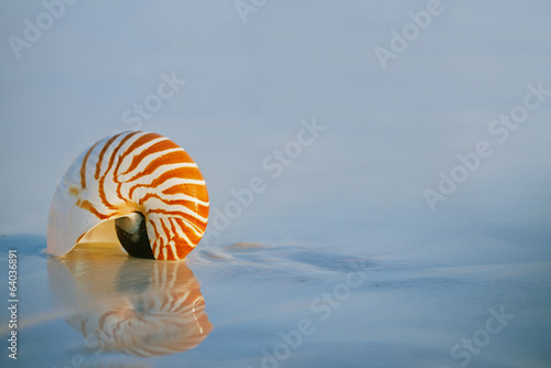 lovely nautilus shell on a still sea ocean beach  and reflection