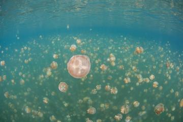 Jellyfish Lake 2