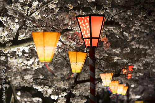 Plakat 桜 祭り の 提灯